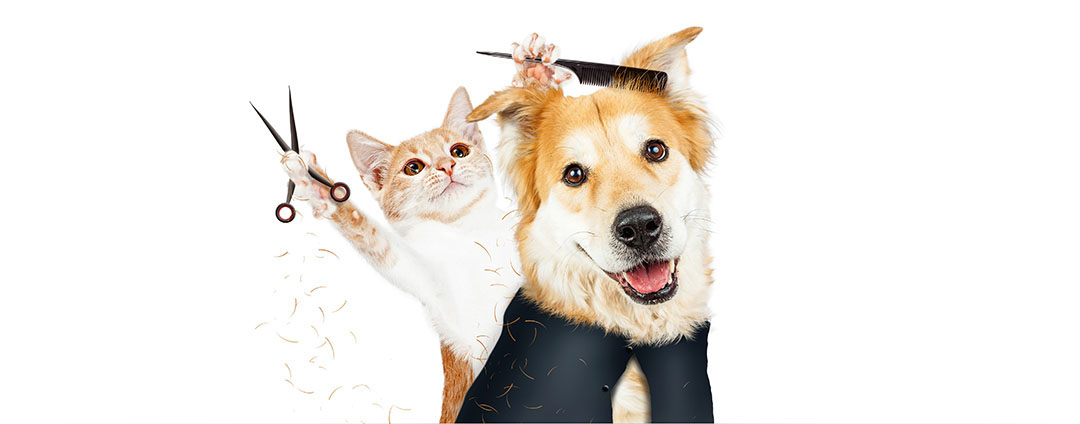 A cat giving a dog a haircut | K'9 Designz | Kamloops, British Columbia