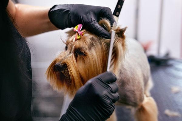 Dog Grooming | K'9 Designz | Kamloops, British Columbia