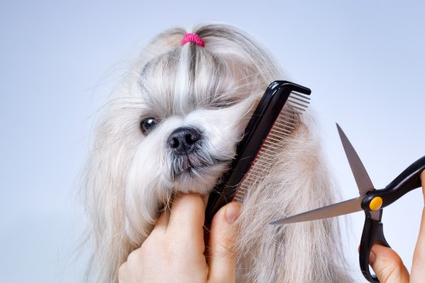 Dog Grooming | K'9 Designz | Kamloops, British Columbia